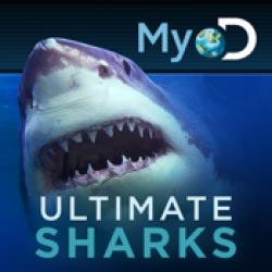'Ultimate Sharks' Review: The Ultimate Shark Week Companion
